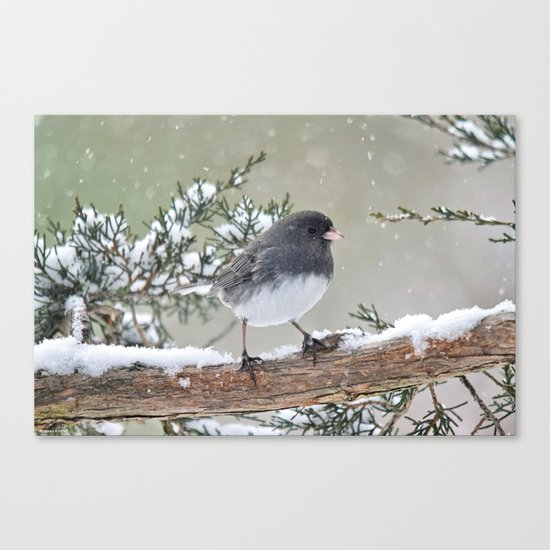 A Small Bird's Strength Canvas Print