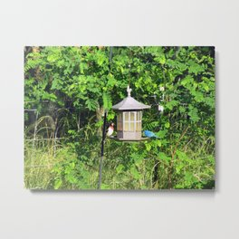 Red-Breasted Grosbeak & Indigo Bunting at Feeder Metal Print