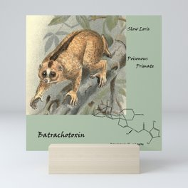 Batrachotoxin, Slow Loris, the Poisonous Primate Mini Art Print