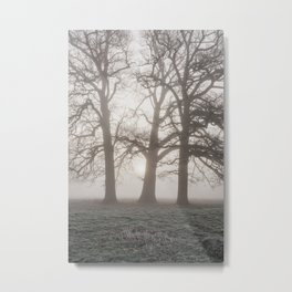 Trees in a frost covered field on a foggy morning. Norfolk, UK. Metal Print