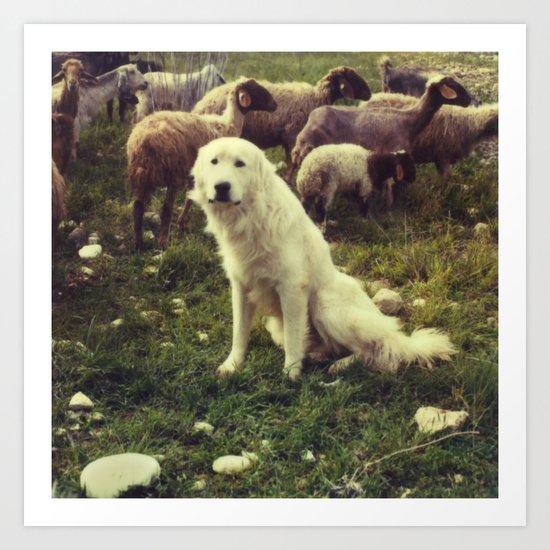 Herding dog, female, south of Israel, scaned sx-70 Polaroid Art Print