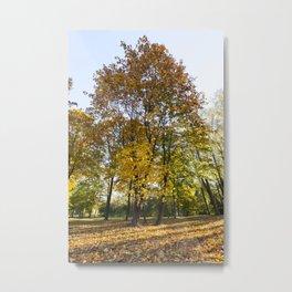 Park in the fall Metal Print