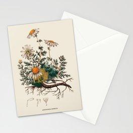 Vintage Camomile Botanical Illustration Stationery Cards