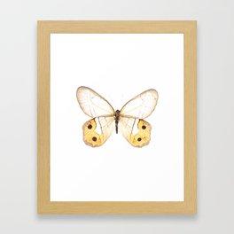 Orange Butterfly Framed Art Print