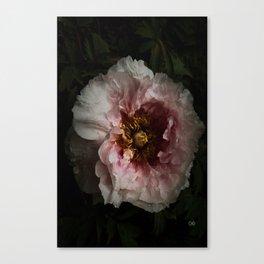 Peony 5 Canvas Print