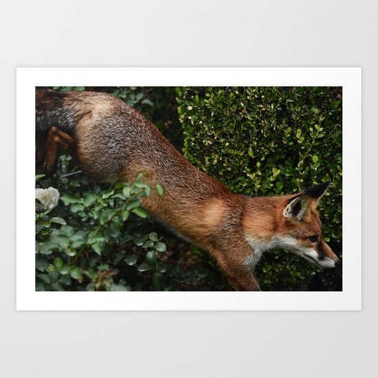 The Quick Brown Fox II Art Print