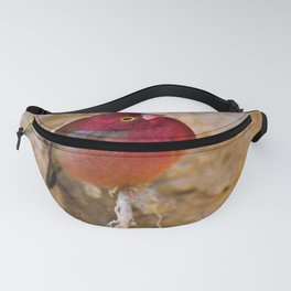 Sweet Little Ruby Finch by Reay of Light Fanny Pack