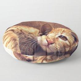 Cat roux Floor Pillow