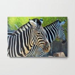 Birmingham Zebras Metal Print