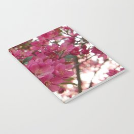 red crabapple flowers and sunset bokeh Notebook