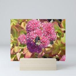 Bee and Sedum Mini Art Print
