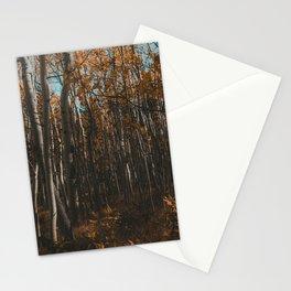 Colorado Aspen Grove Photograph Stationery Cards