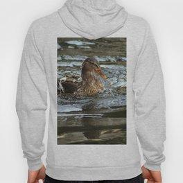 Mallard Duck Swimming Hoody
