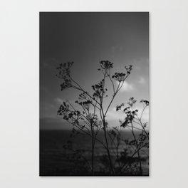 Big Sur Wild Flowers IV Canvas Print