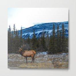 Jasper Local- Aka Mr. Male Elk/Wapiti Metal Print
