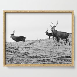 Stags on the hill Serving Tray