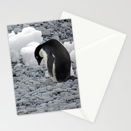 Adelie Penguin Stationery Cards