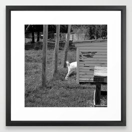 A goat's tale of a tail Framed Art Print