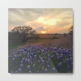 Texas Bluebonnet Sunset Metal Print
