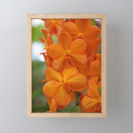 Orange Orchids Framed Mini Art Print