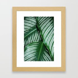 Green Tropical Leaves with White Stripes Closeup Framed Art Print