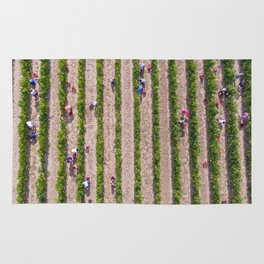 Grape Vine Rug