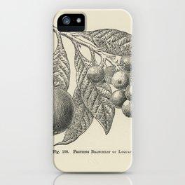 The fruit grower's guide  Vintage illustration of loquat iPhone Case