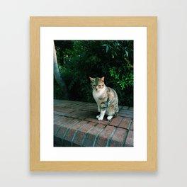 kedi.5 Framed Art Print