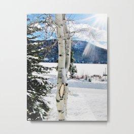 White Birch Tree in Snow Metal Print