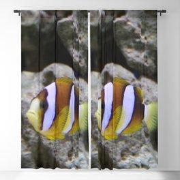 Sea World Colorful Fish Blackout Curtain