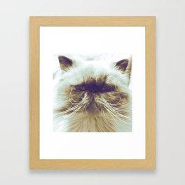 EXOTIC CAT Framed Art Print