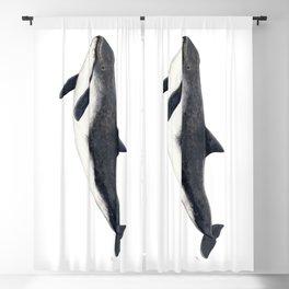 Harbour porpoise (Phocoena phocoena) Blackout Curtain