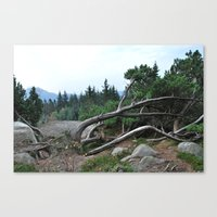 nordic Canvas Prints featuring Nordic by silviadevries