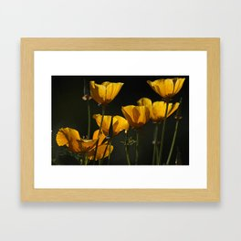 Yellow cups of sunshine Framed Art Print