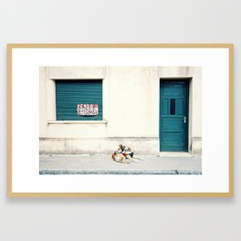 Street dog in Uruguay Framed Art Print