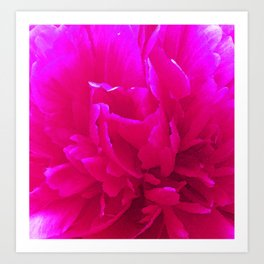 Rose close up bright pink Art Print
