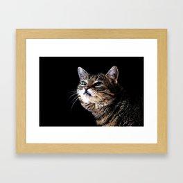 Lieschen Müller, Lilly the sweet tiger cat Framed Art Print