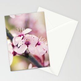Pink Sakura - Cherry Blossom - Floral Art Stationery Cards