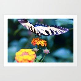 Lantana - Lantana camara cv. Miss Huff Art Print