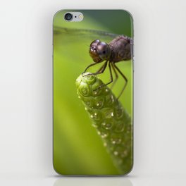 Macro of a Dragonfly iPhone Skin