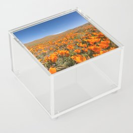 Blooming poppies in Antelope Valley Poppy Reserve Acrylic Box