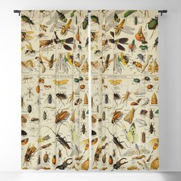 Insects Vintage Scientific Illustration French Language Encyclopedia Lithographs Educational Blackout Curtain