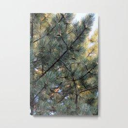 sun pine Metal Print