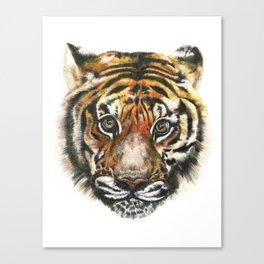 Tiger! Canvas Print