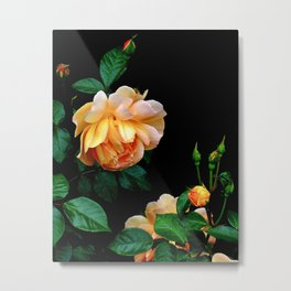 Heavy Hangs the Head of Beauty-Apricot Rose Metal Print