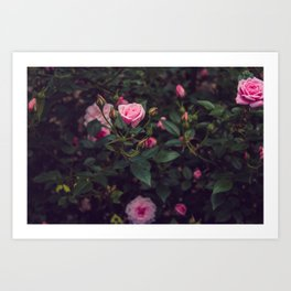 Sweet Summertime III Art Print