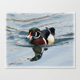 Wood duck in the channel Canvas Print