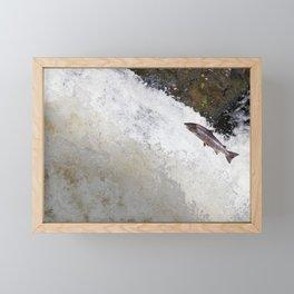 Leaping Salmon Framed Mini Art Print