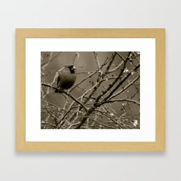 Cardinal Framed Art Print