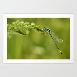 Dragonfly Small Art Print